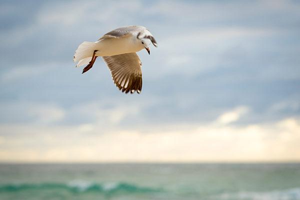Wildlife of Bermuda